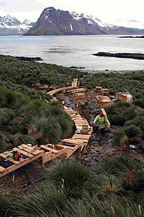 Construction of the Prion Island Board walk