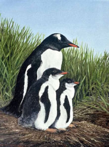 Gentoo twins. This painting by Mike Skidmore will feature in the art exhibition.