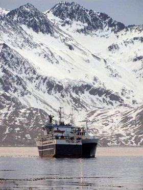 Longline fishing vessels transshipping in Cumberland Bay.