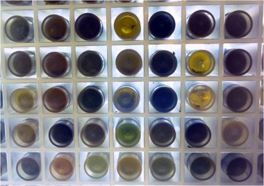 Some colourful faecal samples collected from the black-browed albatross for the Australian Antarctic Division.