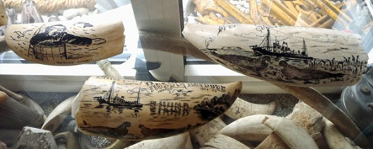Some South Georgia scrimshaw in the vast collection held in the Atlantic Hotel in Sandefjord.