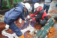 Find out how the South Georgia fishery is managed