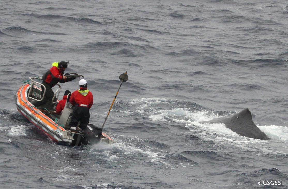 Amazing what a 54g satellite tag reveals about a 40t sperm whale.