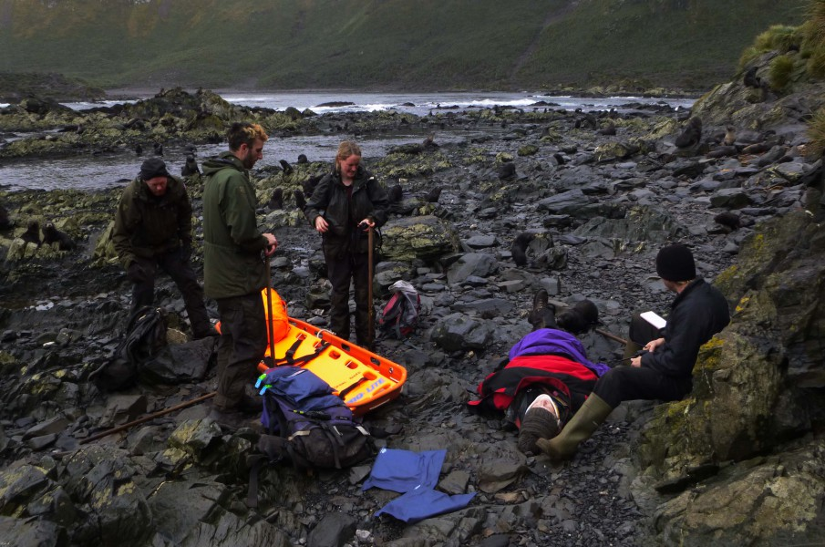 Search & Rescue: The second party arrives at the scene of the incident with the stretcher, but they aren't the only ones to show an interest as a curious fur seal pup wants a sniff of the casualty