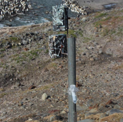 A timelapse camera at St Andrews, showing two pollen rain traps attached to the support pole. These traps consist of a plastic tube half filled with glycerol, covered with a gauze mesh and attached to the pole with wire or jubilee clips.
