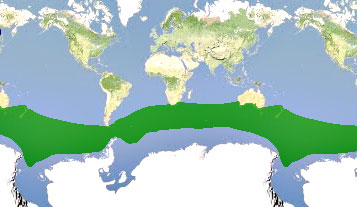 Google map showing the global distribution of the Kerguelen Petrel.